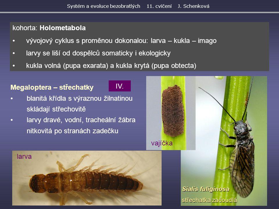 Sialis fuliginosa střechatka začoudlá Megaloptera – střechatky blanitá křídla s výraznou žilnatinou skládají střechovitě larvy dravé, vodní, tracheáln