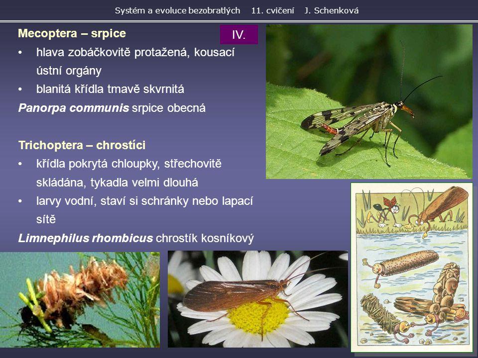 Mecoptera – srpice hlava zobáčkovitě protažená, kousací ústní orgány blanitá křídla tmavě skvrnitá Panorpa communis srpice obecná Trichoptera – chrost