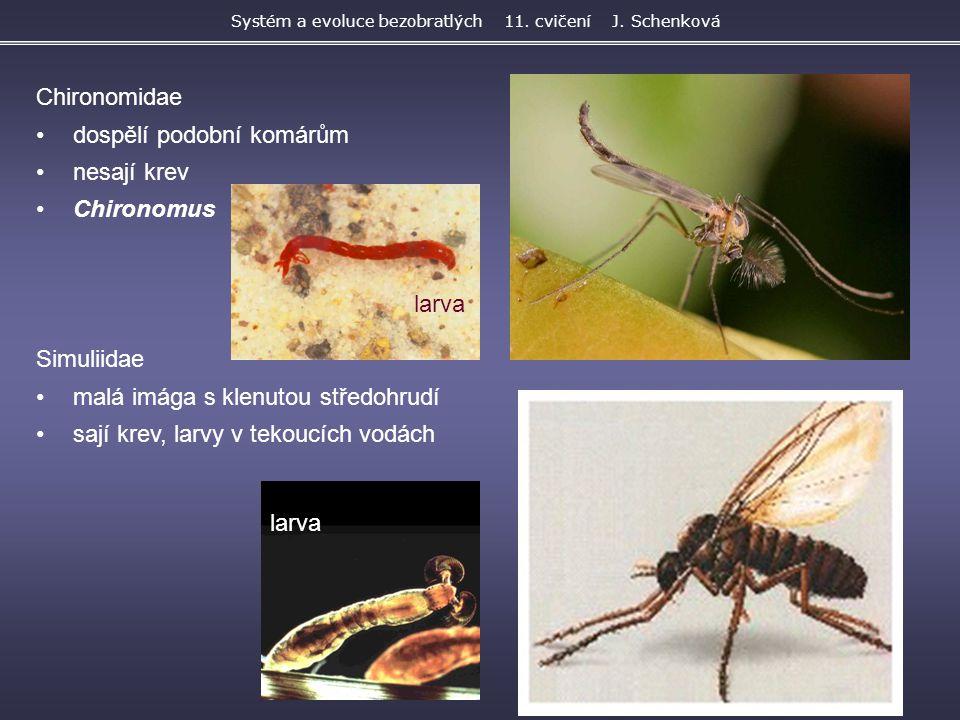 Chironomidae dospělí podobní komárům nesají krev Chironomus Simuliidae malá imága s klenutou středohrudí sají krev, larvy v tekoucích vodách Systém a