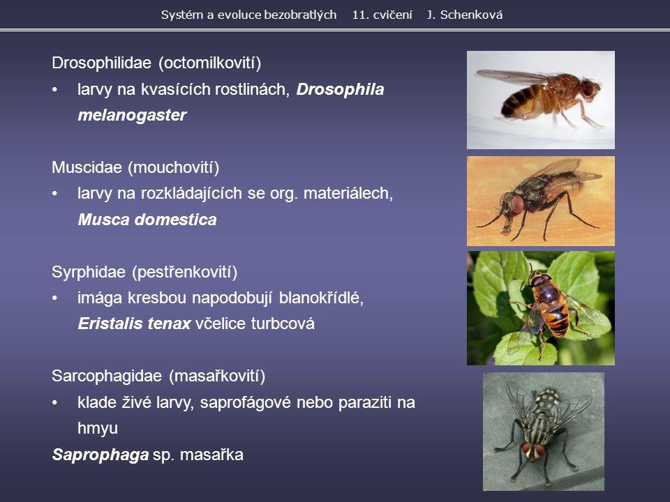 Drosophilidae (octomilkovití) larvy na kvasících rostlinách, Drosophila melanogaster Muscidae (mouchovití) larvy na rozkládajících se org. materiálech