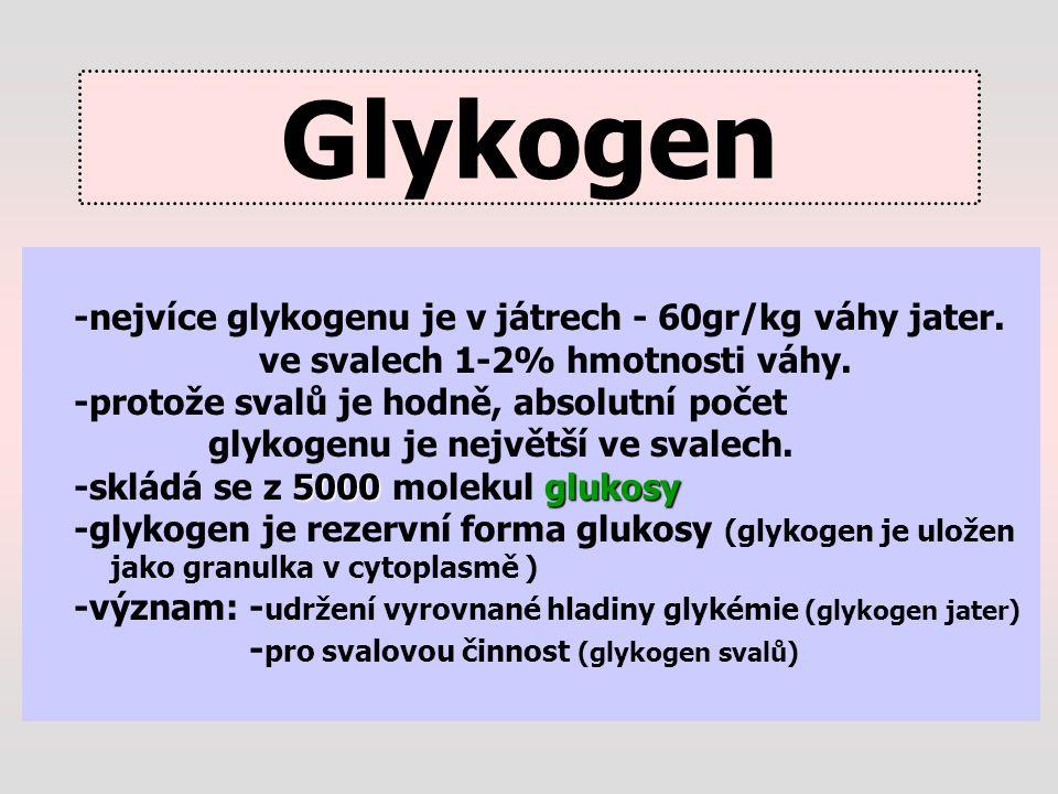 Glykogen -nejvíce glykogenu je v játrech - 60gr/kg váhy jater. ve svalech 1-2% hmotnosti váhy. -protože svalů je hodně, absolutní počet glykogenu je n
