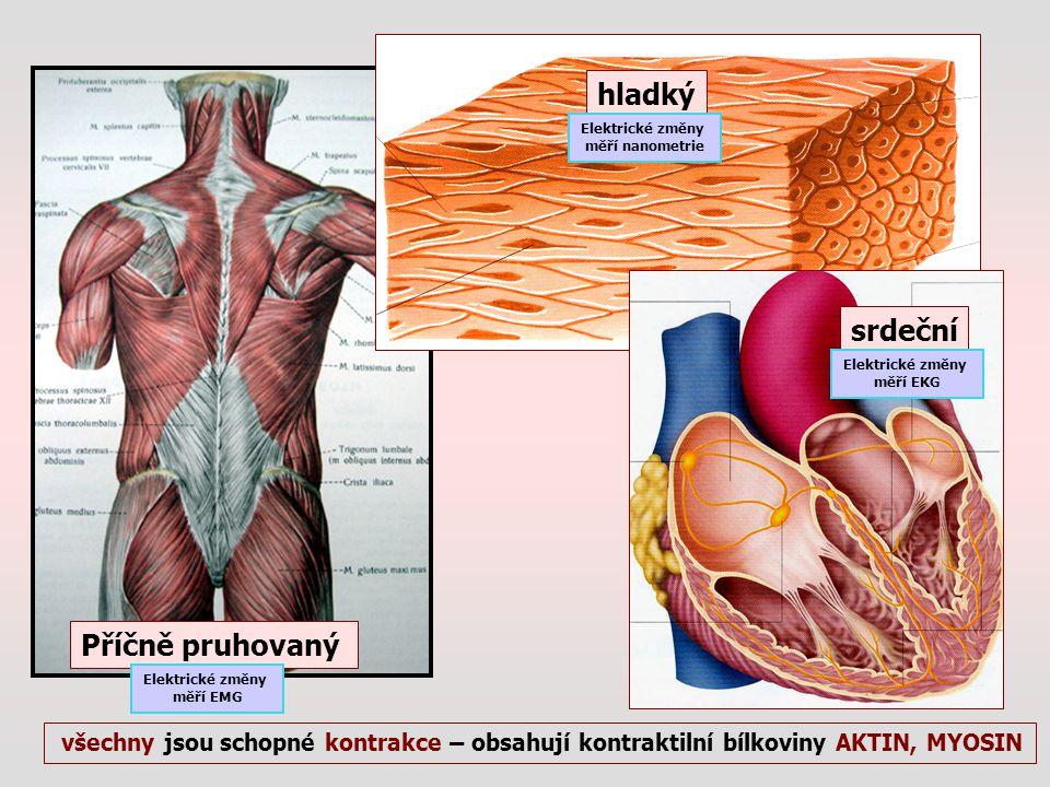 Příčně pruhovaný hladký srdeční všechny jsou schopné kontrakce – obsahují kontraktilní bílkoviny AKTIN, MYOSIN Elektrické změny měří EKG Elektrické zm