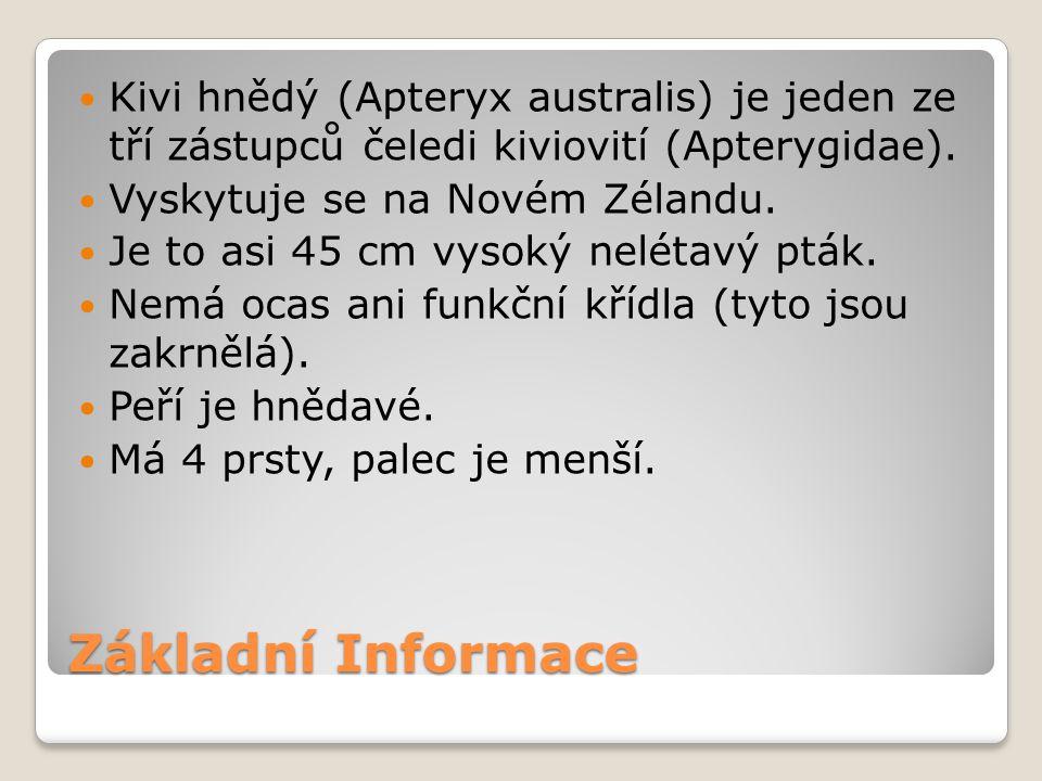 Základní Informace Kivi hnědý (Apteryx australis) je jeden ze tří zástupců čeledi kiviovití (Apterygidae). Vyskytuje se na Novém Zélandu. Je to asi 45