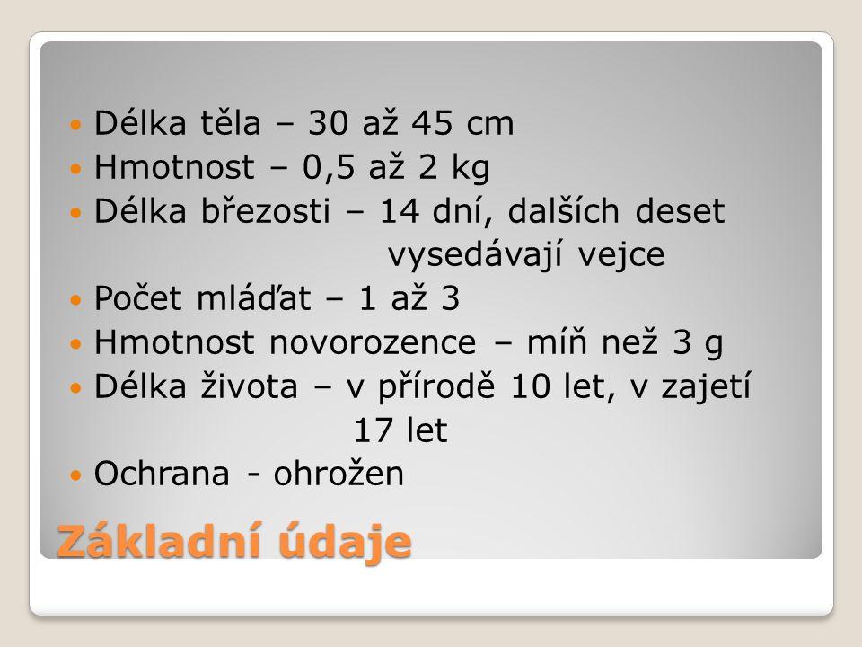 Základní údaje Délka těla – 30 až 45 cm Hmotnost – 0,5 až 2 kg Délka březosti – 14 dní, dalších deset vysedávají vejce Počet mláďat – 1 až 3 Hmotnost