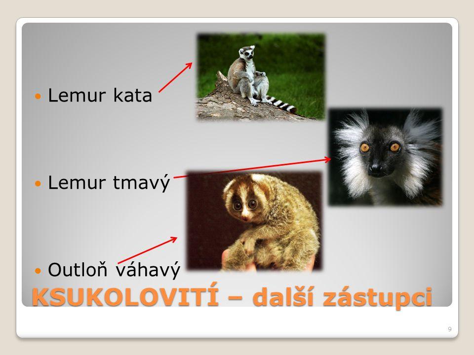 KSUKOLOVITÍ – další zástupci Lemur kata Lemur tmavý Outloň váhavý 9