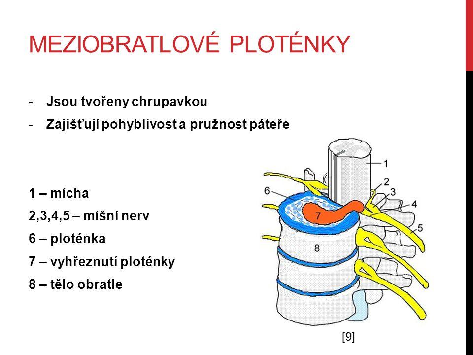 MEZIOBRATLOVÉ PLOTÉNKY -Jsou tvořeny chrupavkou -Zajišťují pohyblivost a pružnost páteře 1 – mícha 2,3,4,5 – míšní nerv 6 – ploténka 7 – vyhřeznutí ploténky 8 – tělo obratle [9][9]