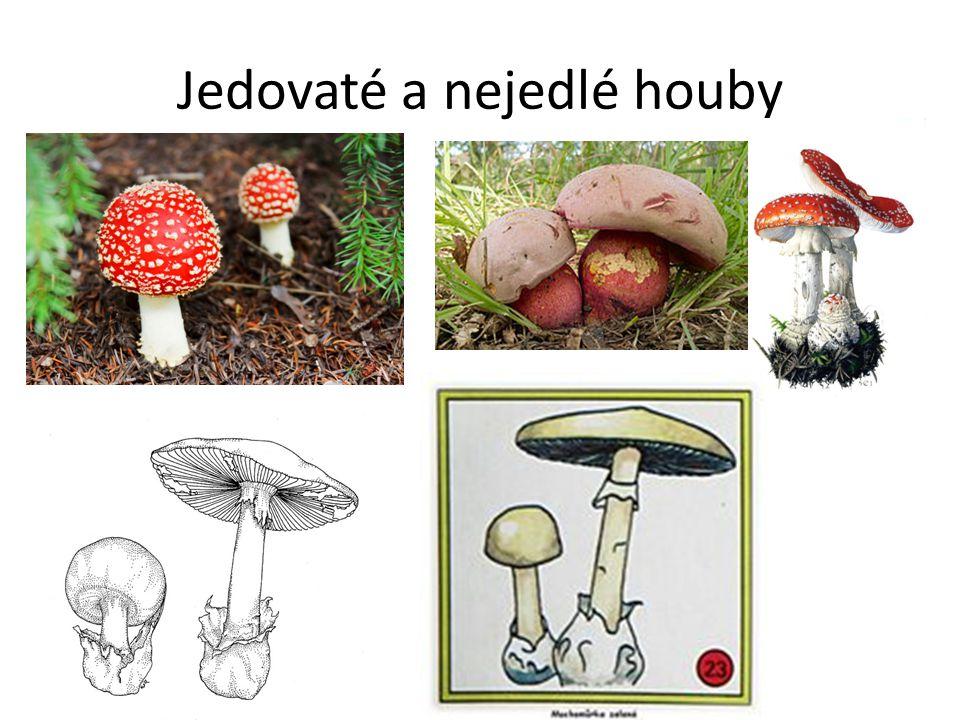 Jedovaté a nejedlé houby