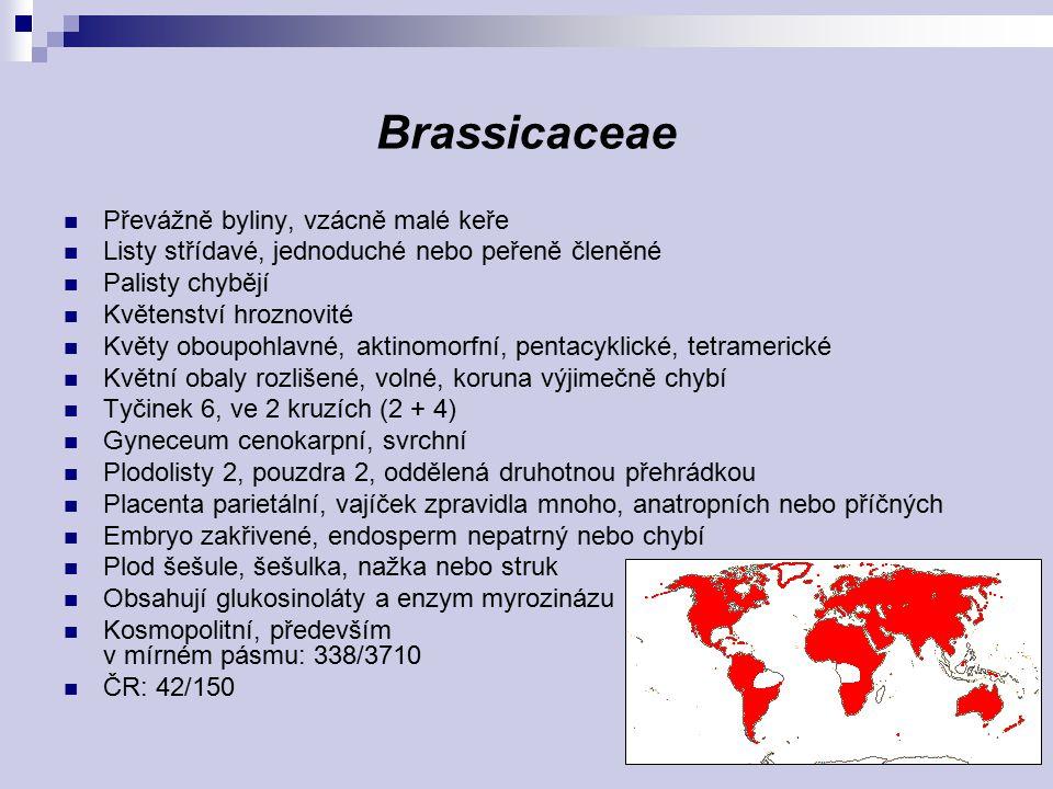 Biscutella laevigata Lunaria rediviva Crambe tataria
