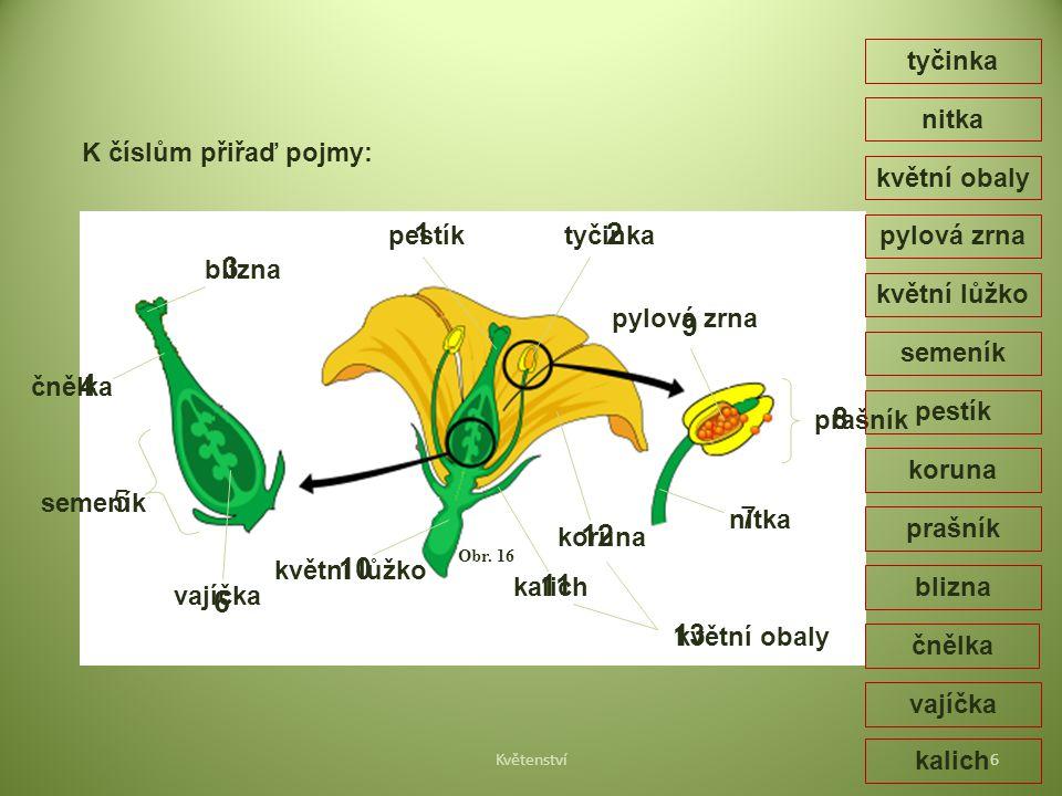 Obr. 16 prašník pylová zrna tyčinka nitka koruna květní obaly kalich květní lůžko vajíčka semeník čnělka blizna pestík semeník pestík květní obaly kvě