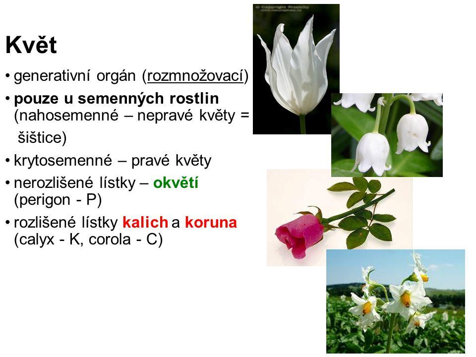 Květ generativní orgán (rozmnožovací) pouze u semenných rostlin (nahosemenné – nepravé květy = šištice) krytosemenné – pravé květy nerozlišené lístky – okvětí (perigon - P) rozlišené lístky kalich a koruna (calyx - K, corola - C)