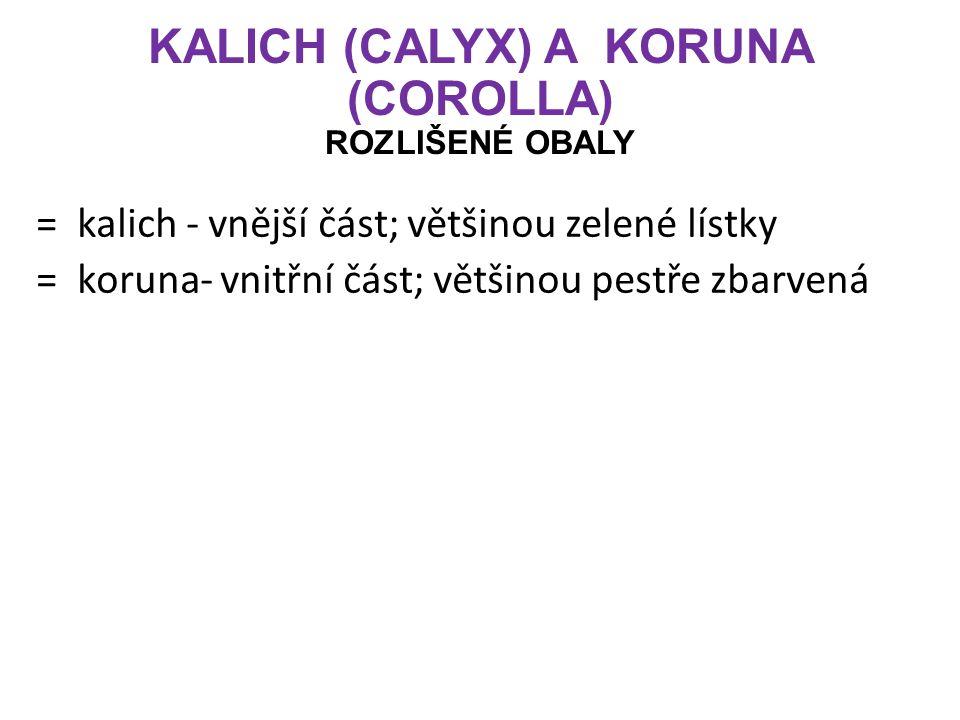 KALICH (CALYX) A KORUNA (COROLLA) ROZLIŠENÉ OBALY = kalich - vnější část; většinou zelené lístky = koruna- vnitřní část; většinou pestře zbarvená