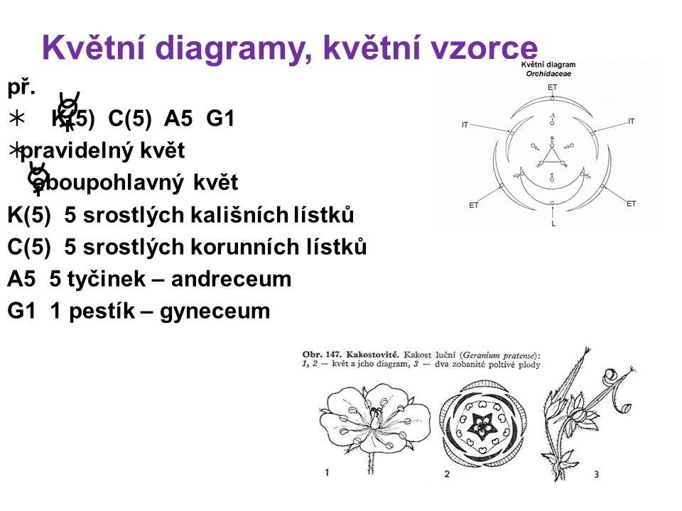 Květní diagramy, květní vzorce př.
