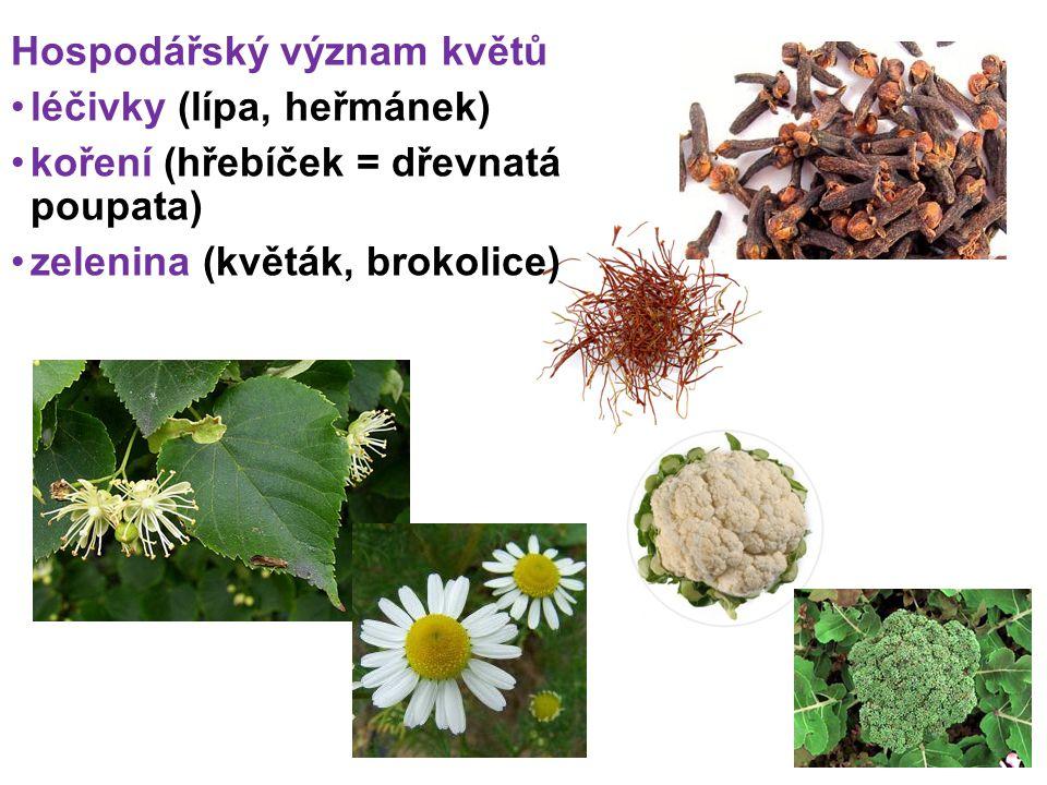 Hospodářský význam květů léčivky (lípa, heřmánek) koření (hřebíček = dřevnatá poupata) zelenina (květák, brokolice)