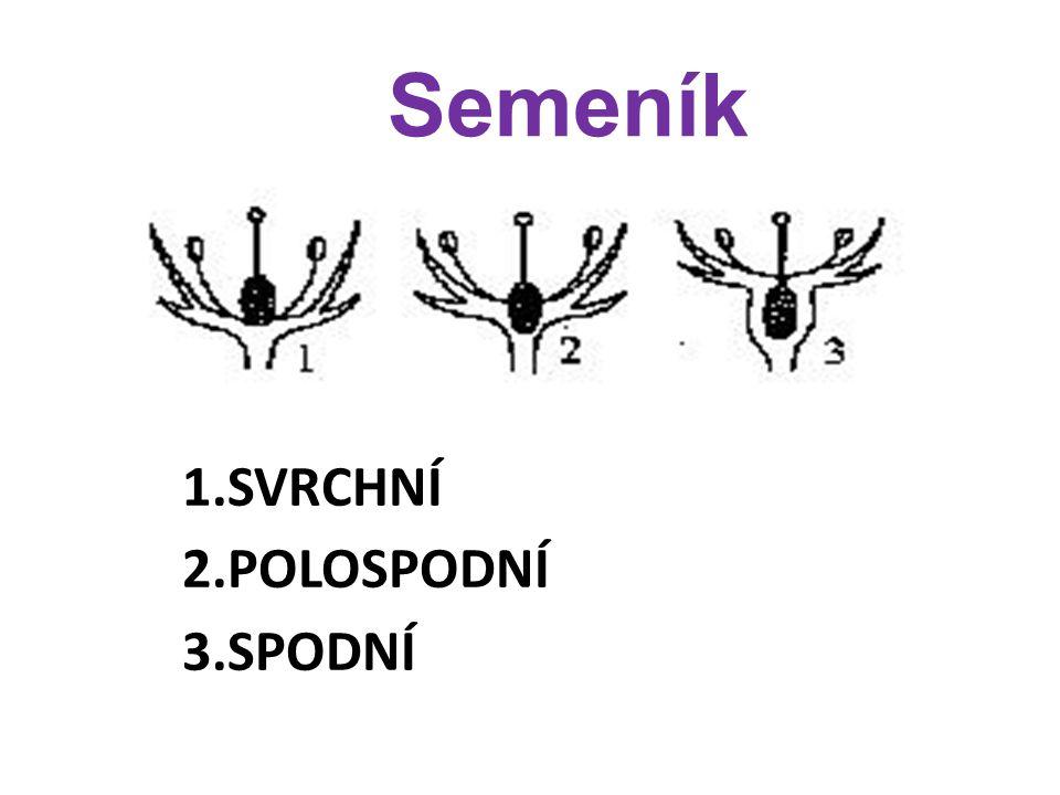 Rozdělení květů dle počtu květních částic: A) 3-četné = květní obaly a orgány se vyskytují po třech nebo v násobku tří, v každém kruhu - např.: liliovité