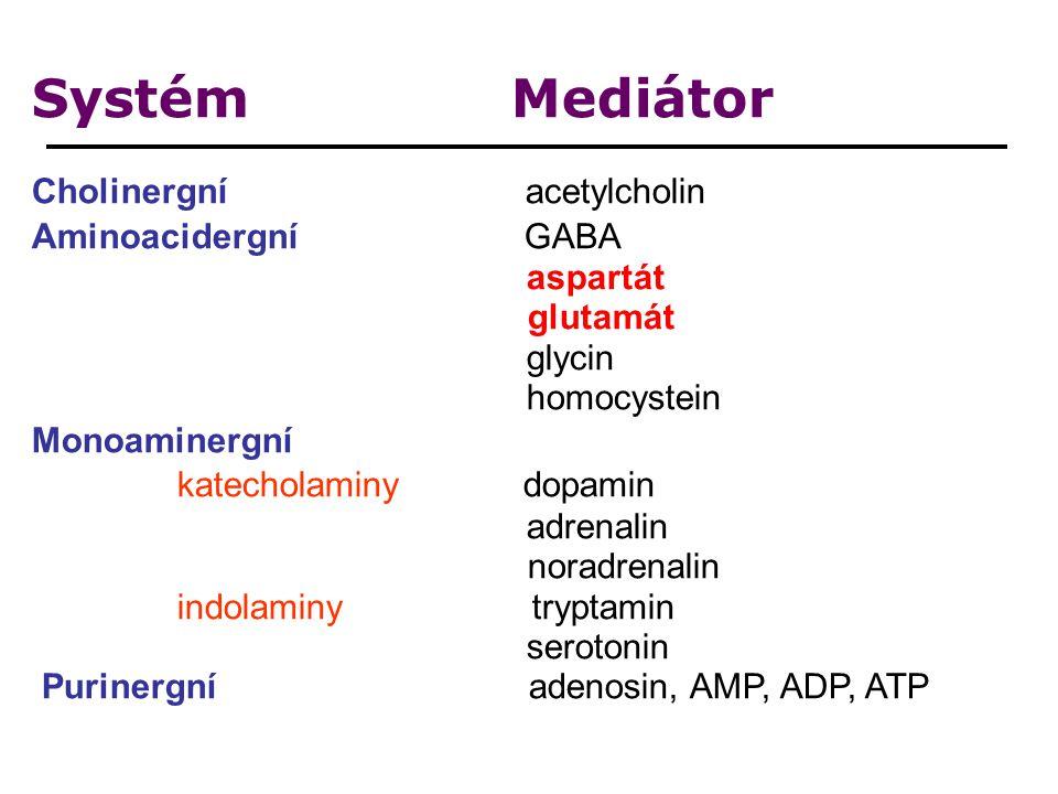 Systém Mediátor Cholinergní acetylcholin Aminoacidergní GABA aspartát glutamát glycin homocystein Monoaminergní katecholaminy dopamin adrenalin noradrenalin indolaminy tryptamin serotonin Purinergní adenosin, AMP, ADP, ATP