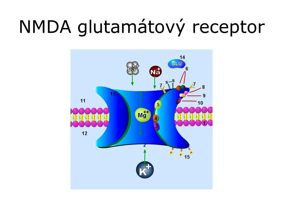 NMDA glutamátový receptor