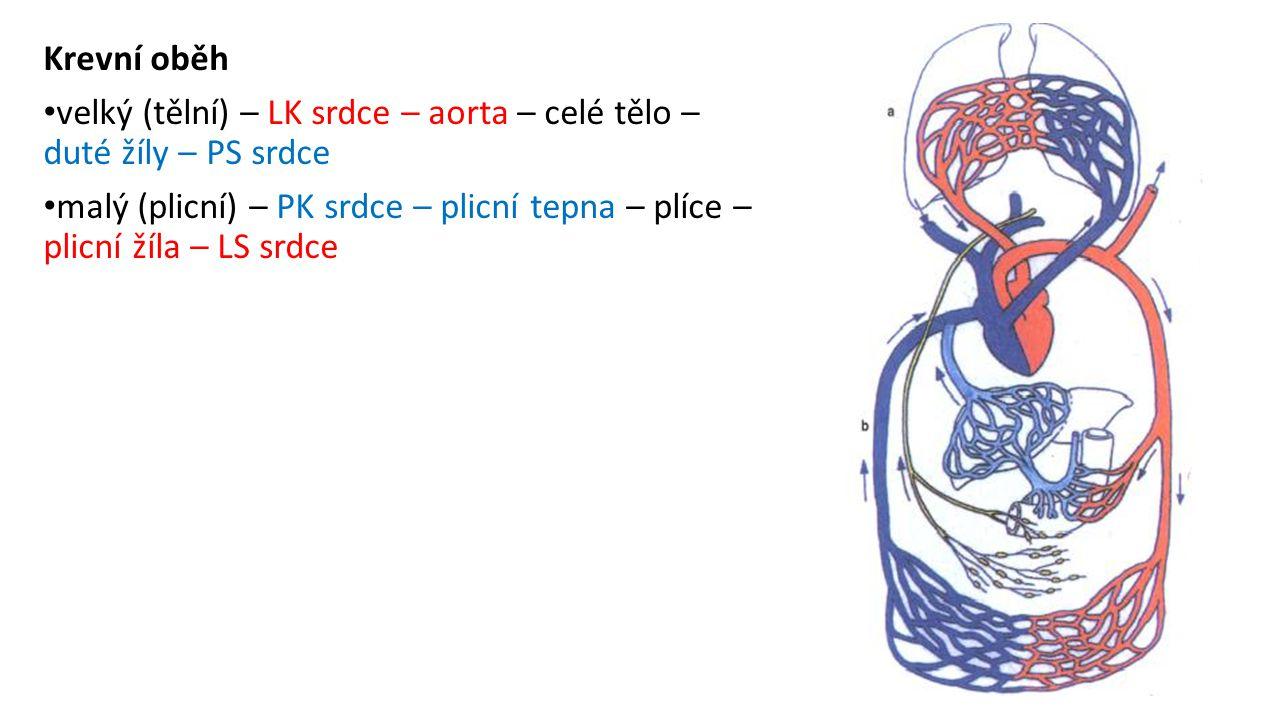 Krevní oběh velký (tělní) – LK srdce – aorta – celé tělo – duté žíly – PS srdce malý (plicní) – PK srdce – plicní tepna – plíce – plicní žíla – LS srd