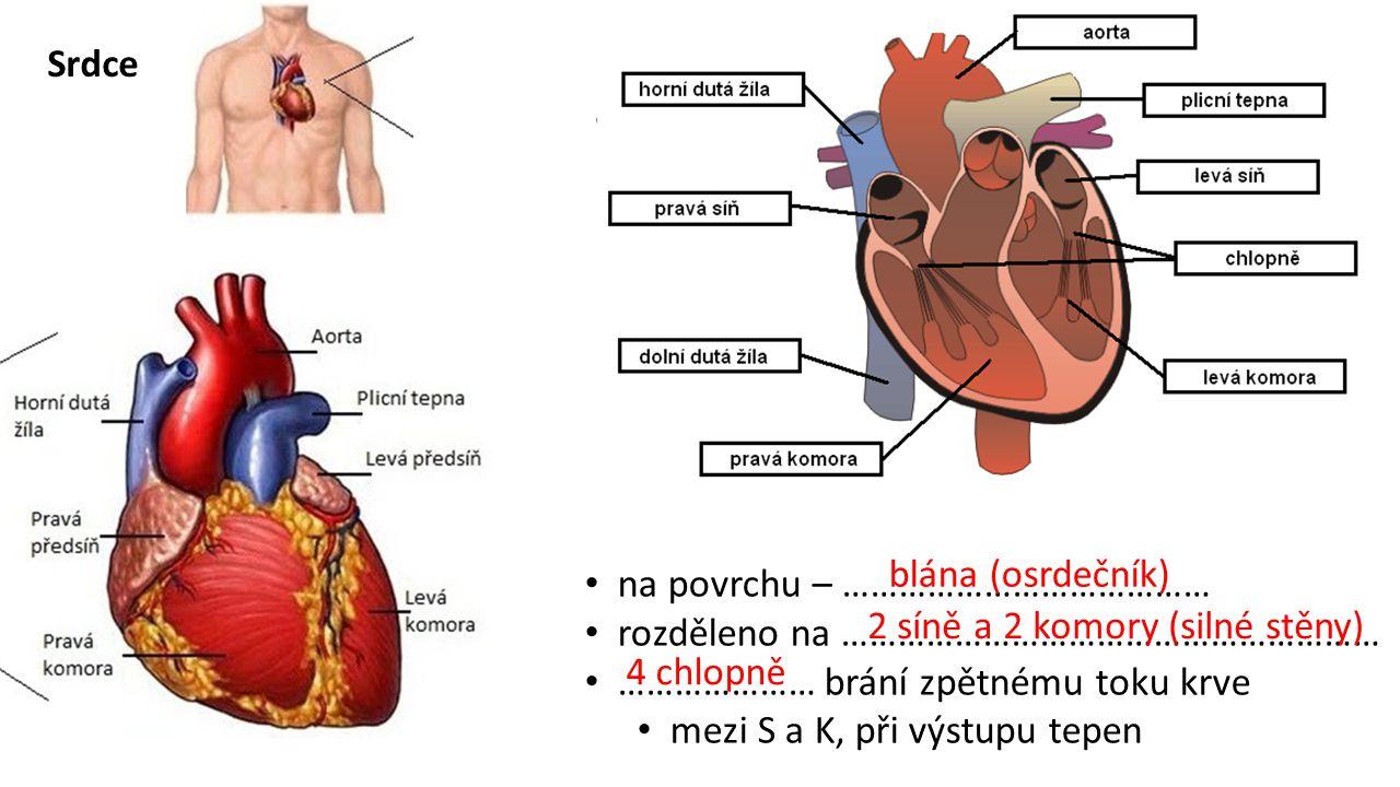 Srdce na povrchu – ………………………………… rozděleno na ………………………………………………… ………………… brání zpětnému toku krve mezi S a K, při výstupu tepen blána (osrdečník) 2 síně a 2 komory (silné stěny) 4 chlopně