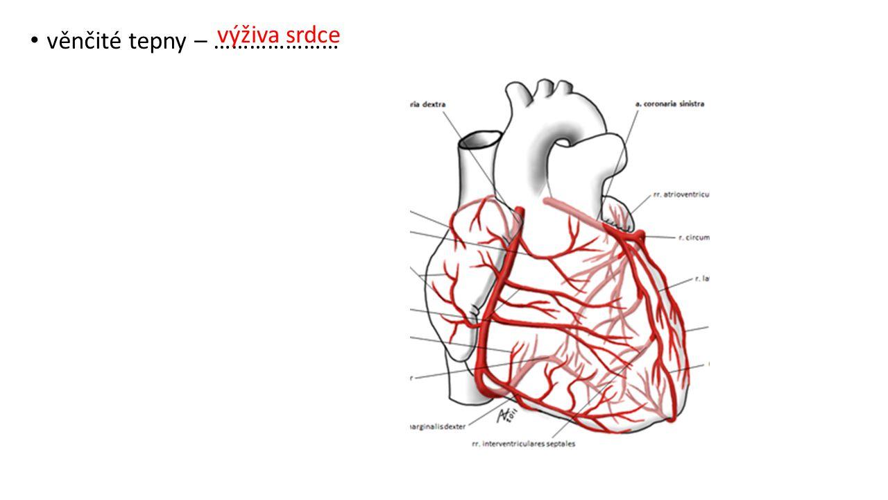 věnčité tepny – ………………… výživa srdce