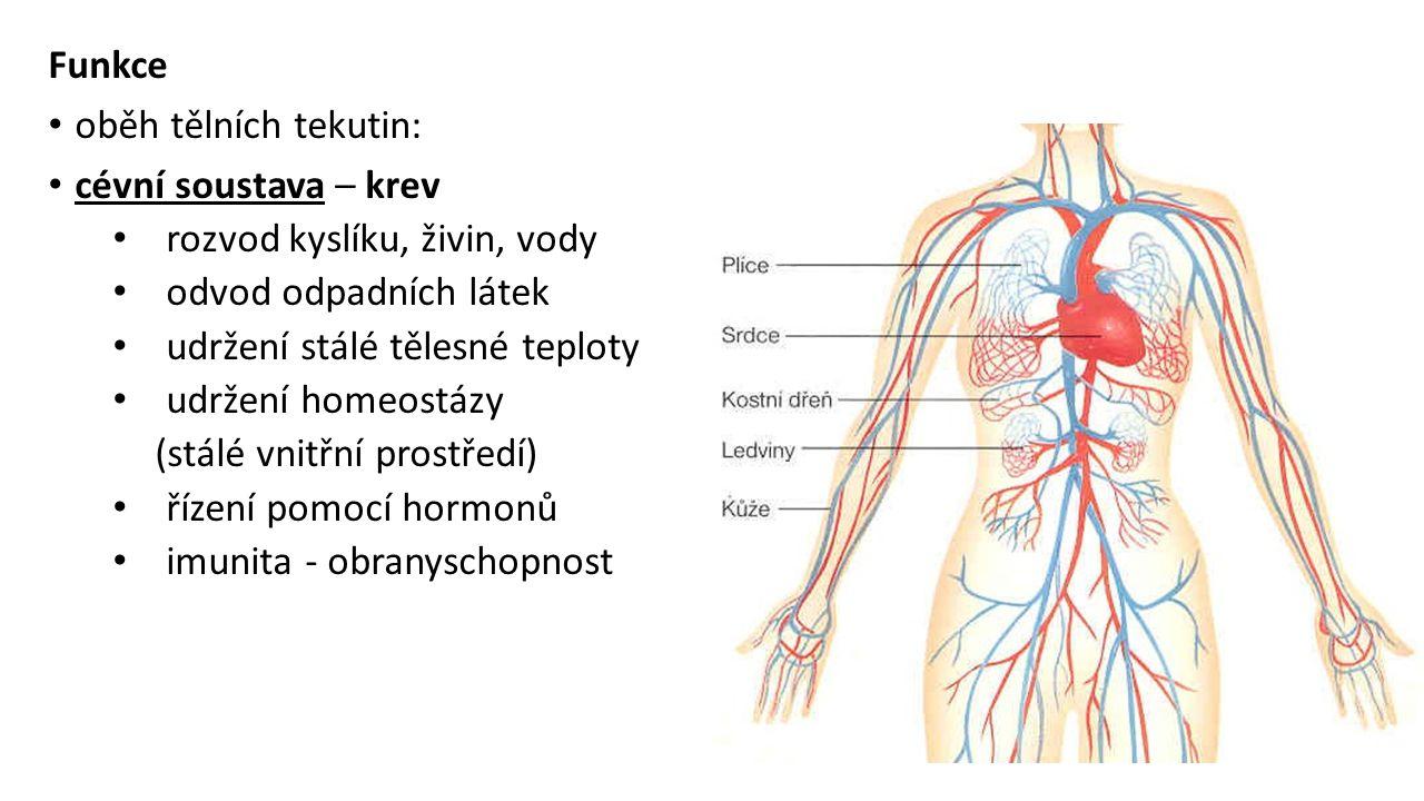 Funkce oběh tělních tekutin: cévní soustava – krev rozvod kyslíku, živin, vody odvod odpadních látek udržení stálé tělesné teploty udržení homeostázy