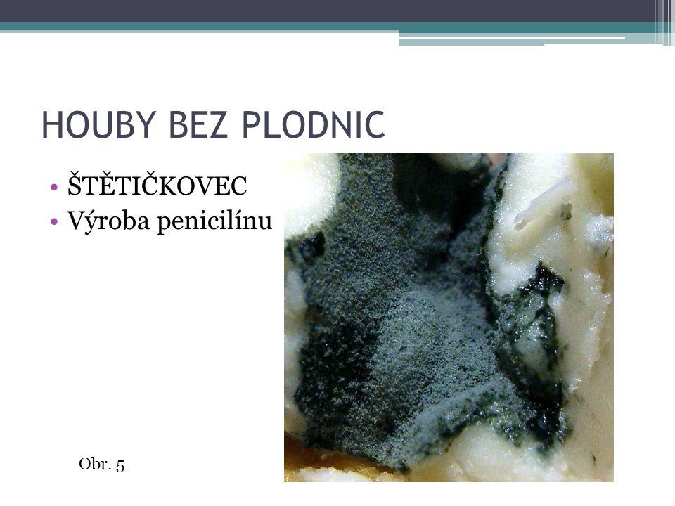 HOUBY BEZ PLODNIC ŠTĚTIČKOVEC Výroba penicilínu Obr. 5
