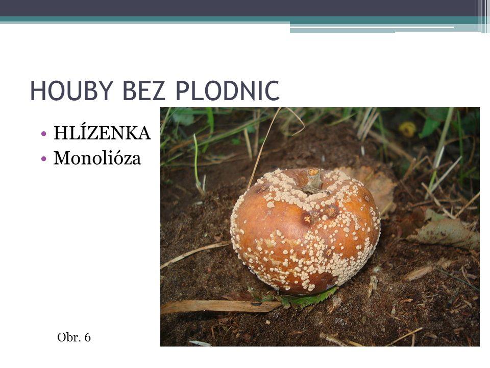 HOUBY BEZ PLODNIC HLÍZENKA Monolióza Obr. 6