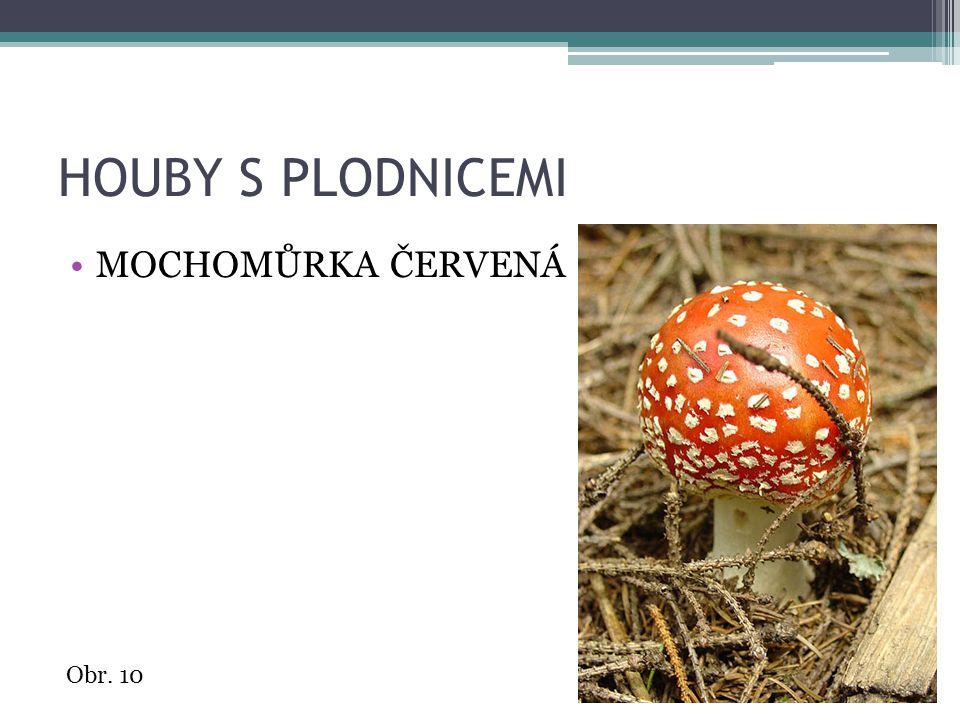 HOUBY S PLODNICEMI MOCHOMŮRKA ČERVENÁ Obr. 10