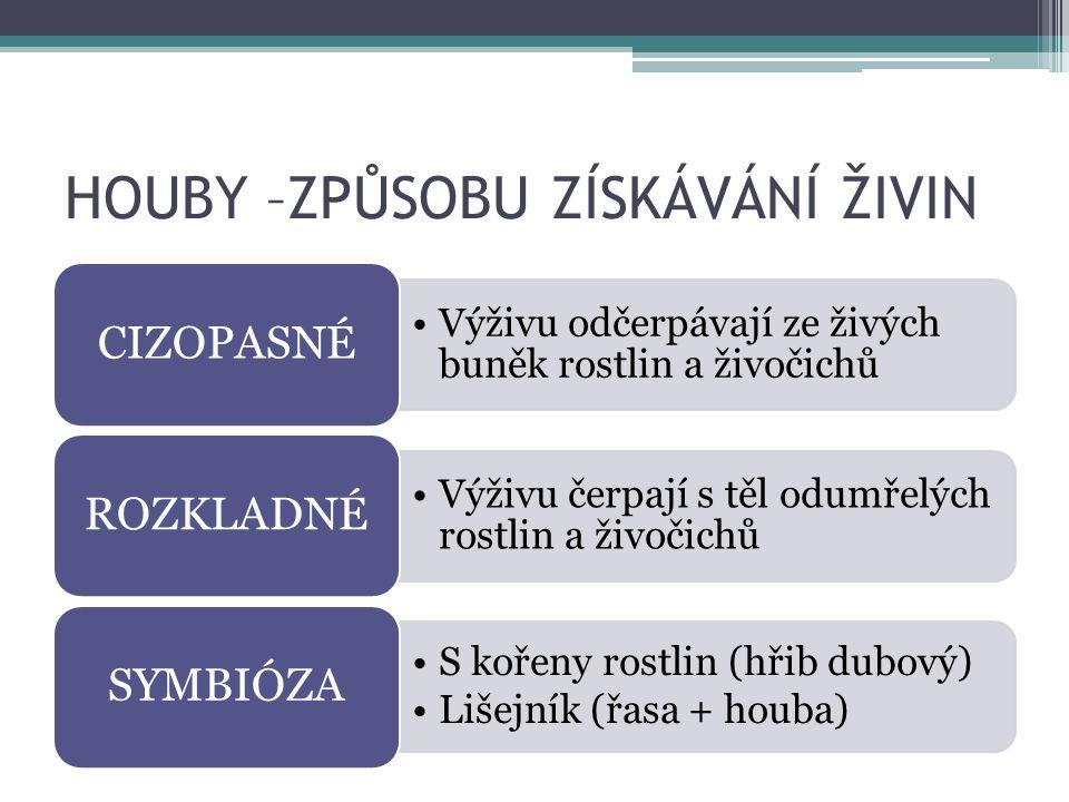 HOUBY S PLODNICEMI HŘIB DUBOVÝ Obr. 12
