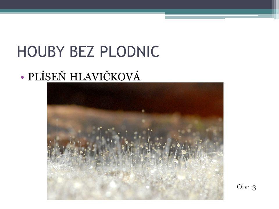 HOUBY BEZ PLODNIC PALIČKOVICE NACHOVÁ Obr. 4