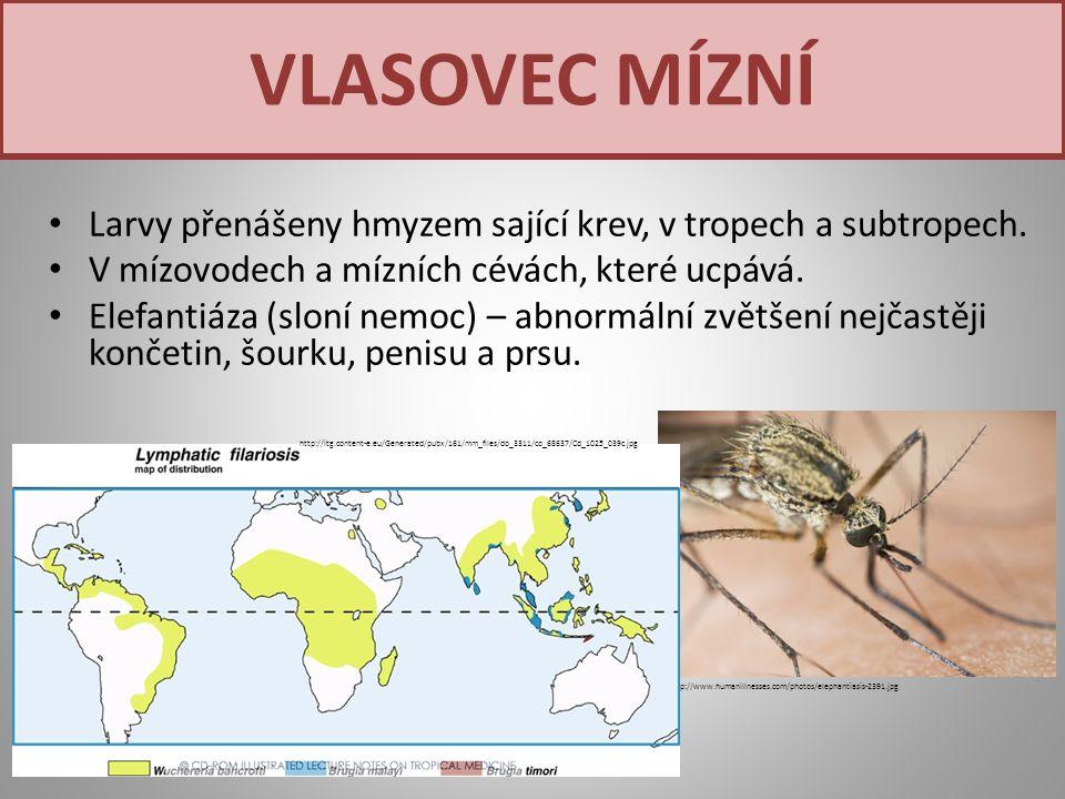 Larvy přenášeny hmyzem sající krev, v tropech a subtropech. V mízovodech a mízních cévách, které ucpává. Elefantiáza (sloní nemoc) – abnormální zvětše