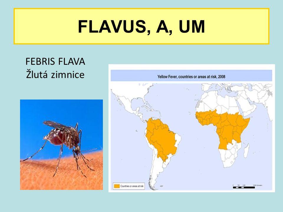 FLAVUS, A, UM FEBRIS FLAVA Žlutá zimnice