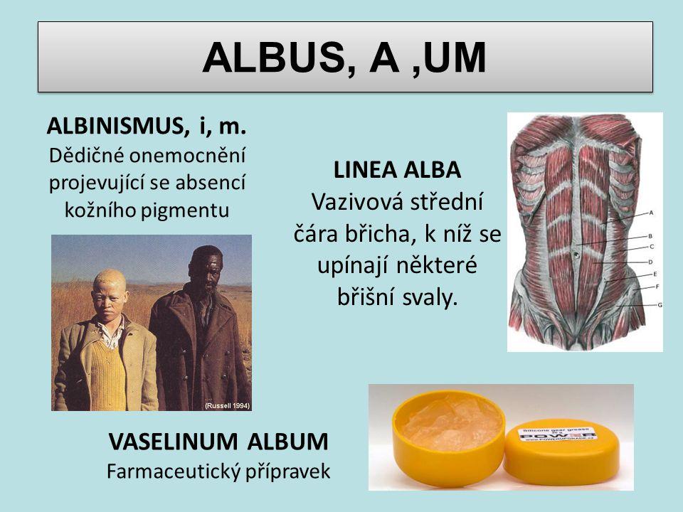 ALBUS, A,UM ALBINISMUS, i, m. Dědičné onemocnění projevující se absencí kožního pigmentu LINEA ALBA Vazivová střední čára břicha, k níž se upínají něk