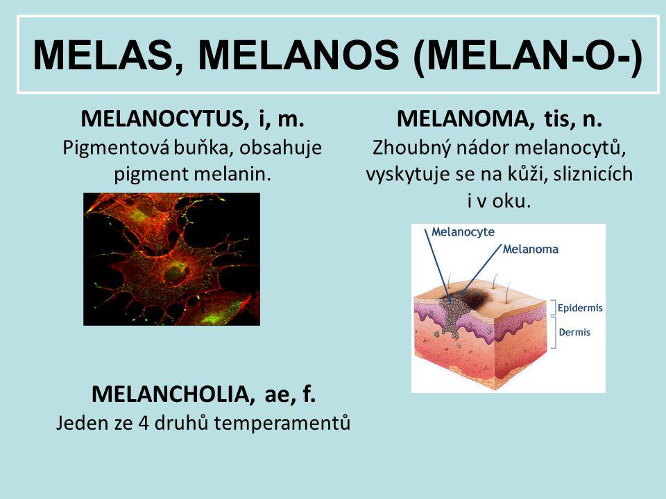 MELAS, MELANOS (MELAN-O-) MELANOCYTUS, i, m. Pigmentová buňka, obsahuje pigment melanin. MELANOMA, tis, n. Zhoubný nádor melanocytů, vyskytuje se na k