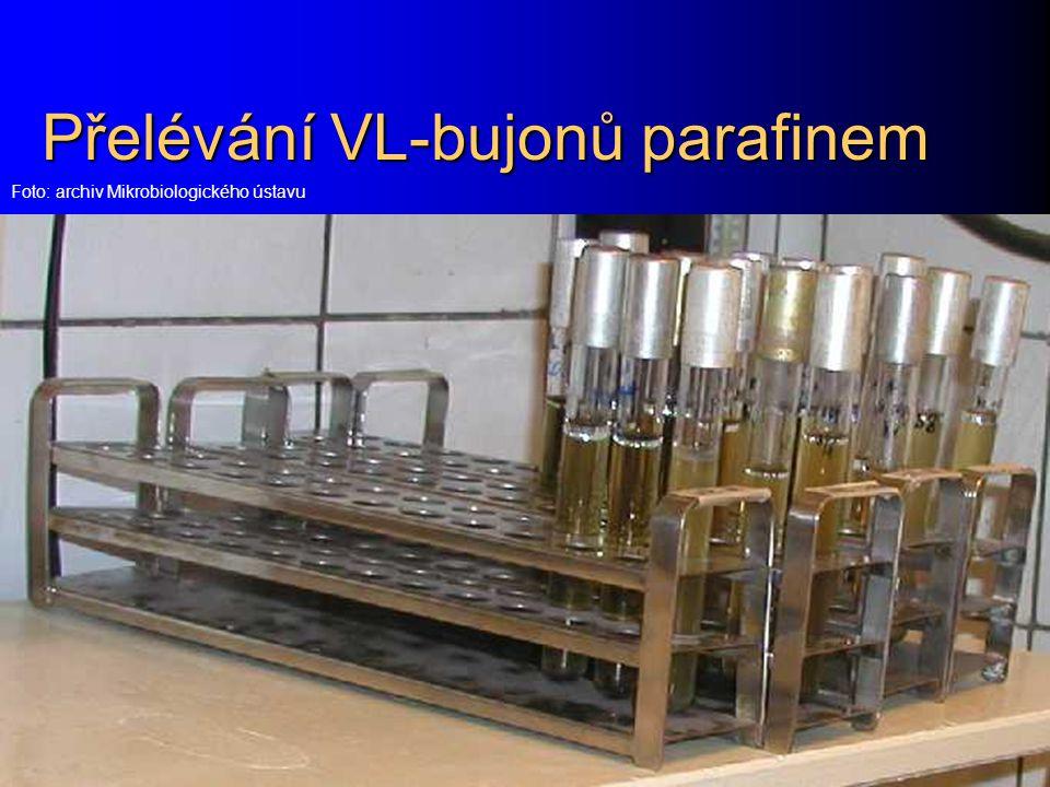 Přelévání VL-bujonů parafinem Foto: archiv Mikrobiologického ústavu
