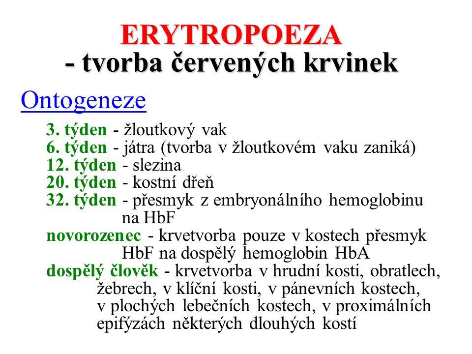ERYTROPOEZA - tvorba červených krvinek Ontogeneze 3. týden - žloutkový vak 6. týden - játra (tvorba v žloutkovém vaku zaniká) 12. týden - slezina 20.