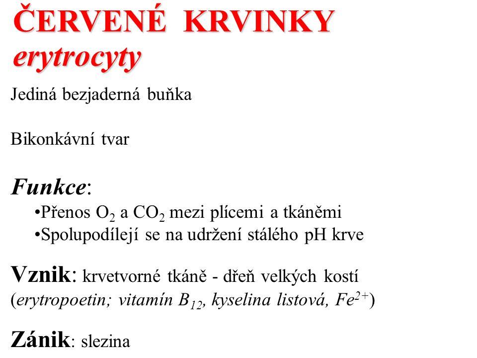 ČERVENÉ KRVINKY erytrocyty Jediná bezjaderná buňka Bikonkávní tvar Funkce: Přenos O 2 a CO 2 mezi plícemi a tkáněmi Spolupodílejí se na udržení stálého pH krve Vznik: krvetvorné tkáně - dřeň velkých kostí (erytropoetin; vitamín B 12, kyselina listová, Fe 2+ ) Zánik : slezina