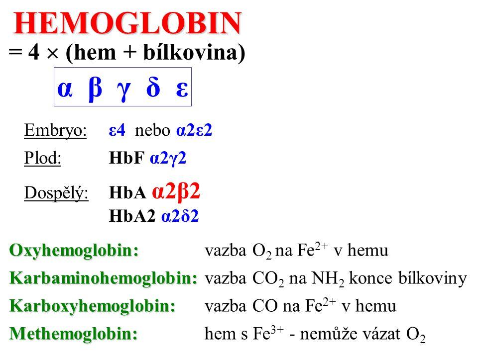 Oxyhemoglobin: Oxyhemoglobin: vazba O 2 na Fe 2+ v hemu Karbaminohemoglobin: Karbaminohemoglobin: vazba CO 2 na NH 2 konce bílkoviny Karboxyhemoglobin: Karboxyhemoglobin: vazba CO na Fe 2+ v hemu Methemoglobin: Methemoglobin: hem s Fe 3+ - nemůže vázat O 2HEMOGLOBIN = 4  (hem + bílkovina) α β γ δ ε Embryo: ε4 nebo α2ε2 Plod: HbF α2γ2 Dospělý: HbA α2β2 HbA2 α2δ2
