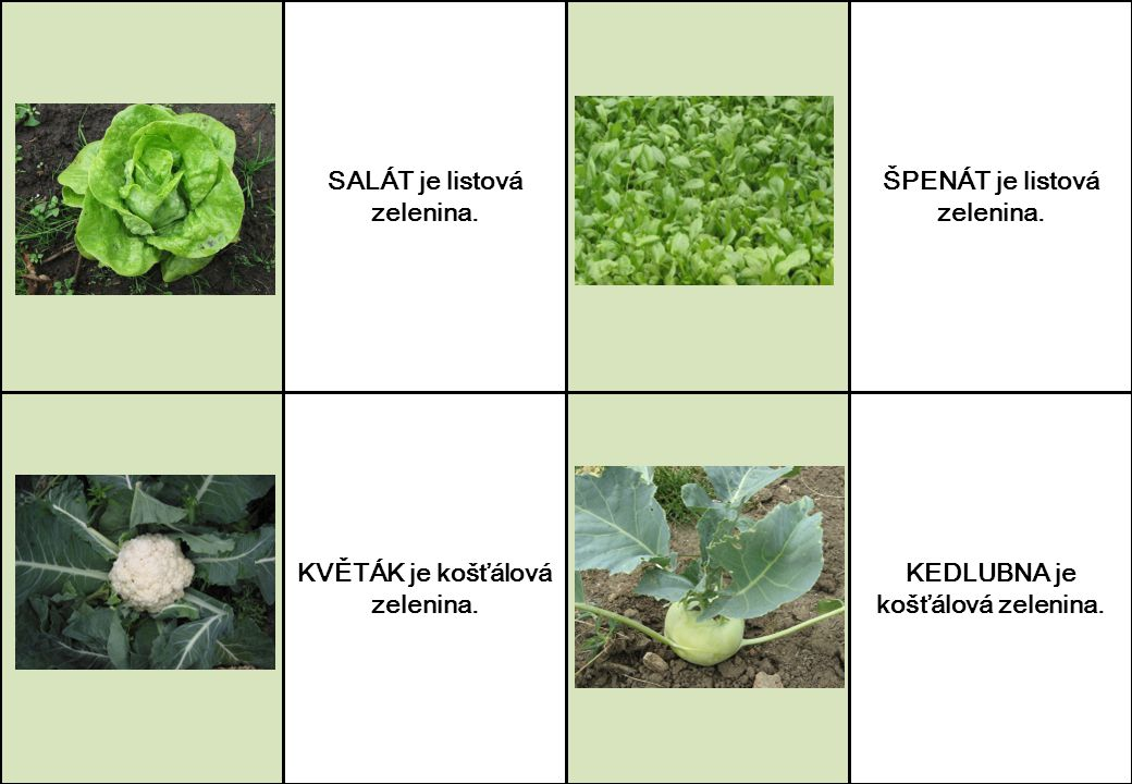 SALÁT je listová zelenina. KVĚTÁK je košťálová zelenina. ŠPENÁT je listová zelenina. KEDLUBNA je košťálová zelenina.