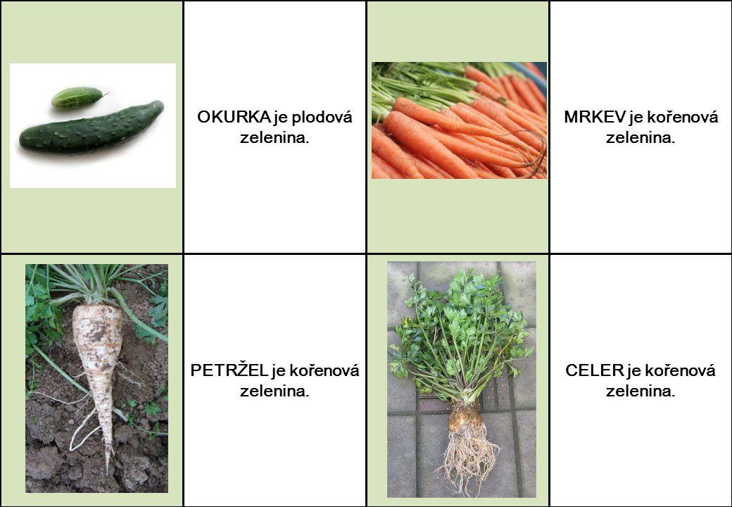 OKURKA je plodová zelenina. PETRŽEL je kořenová zelenina. MRKEV je kořenová zelenina. CELER je kořenová zelenina.
