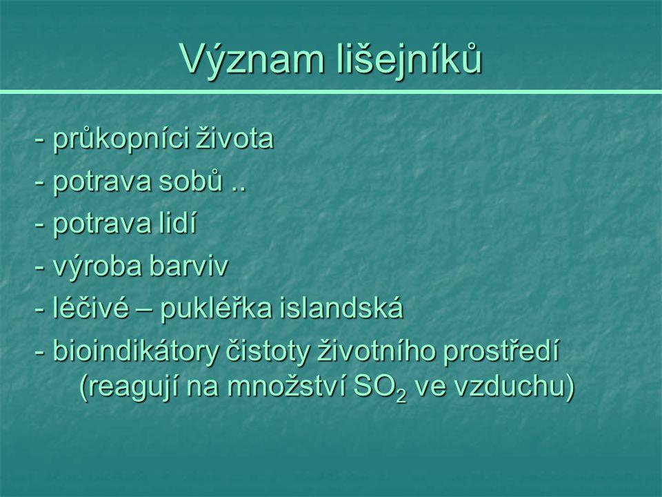 Význam lišejníků - průkopníci života - potrava sobů.. - potrava lidí - výroba barviv - léčivé – pukléřka islandská - bioindikátory čistoty životního p
