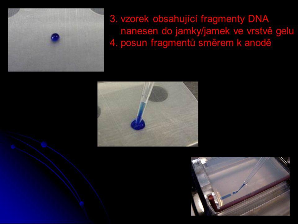 3. vzorek obsahující fragmenty DNA nanesen do jamky/jamek ve vrstvě gelu 4. posun fragmentů směrem k anodě