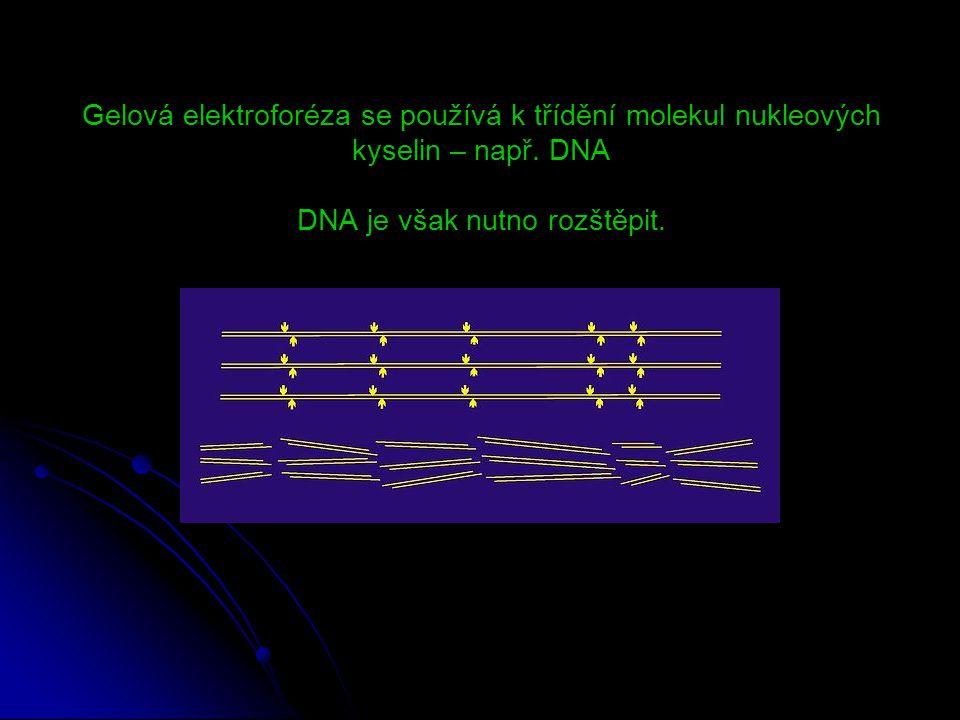 Gelová elektroforéza se používá k třídění molekul nukleových kyselin – např. DNA DNA je však nutno rozštěpit.