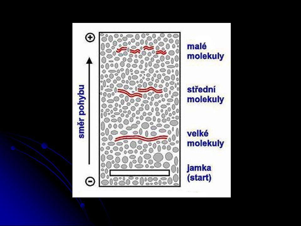 Třídění molekul nukleových kyselin v gelu - postup: 1.