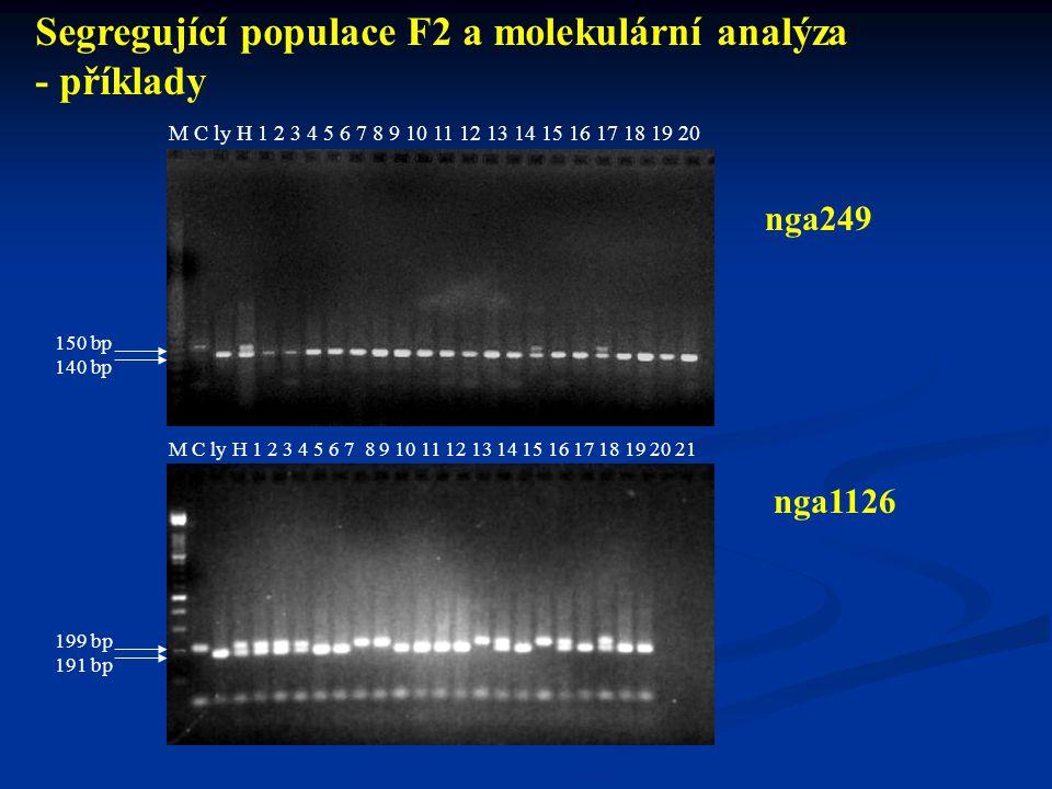 Postup 20 až 30 vzorků DNA ly z F 2 Kontroly: rodiče, F 1 PCR pro SSR markery PCR pro SSR markery ELFO ELFO PCR pro CAPS markery PCR pro CAPS markery