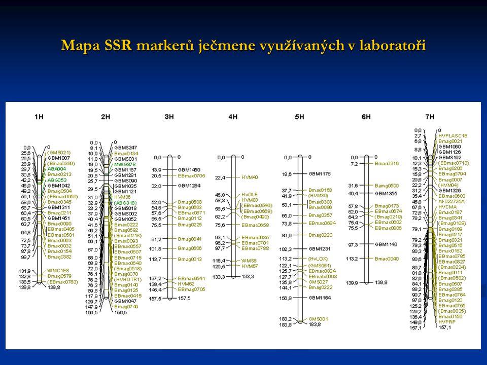 Strategie řešení 1. Vytvoření vhodných populací pro analýzy odrůda ´Tiffany´x zdroj odolnosti F 2 odrůda ´Tiffany´x zdroj odolnosti F 2 2. Fytopatolog