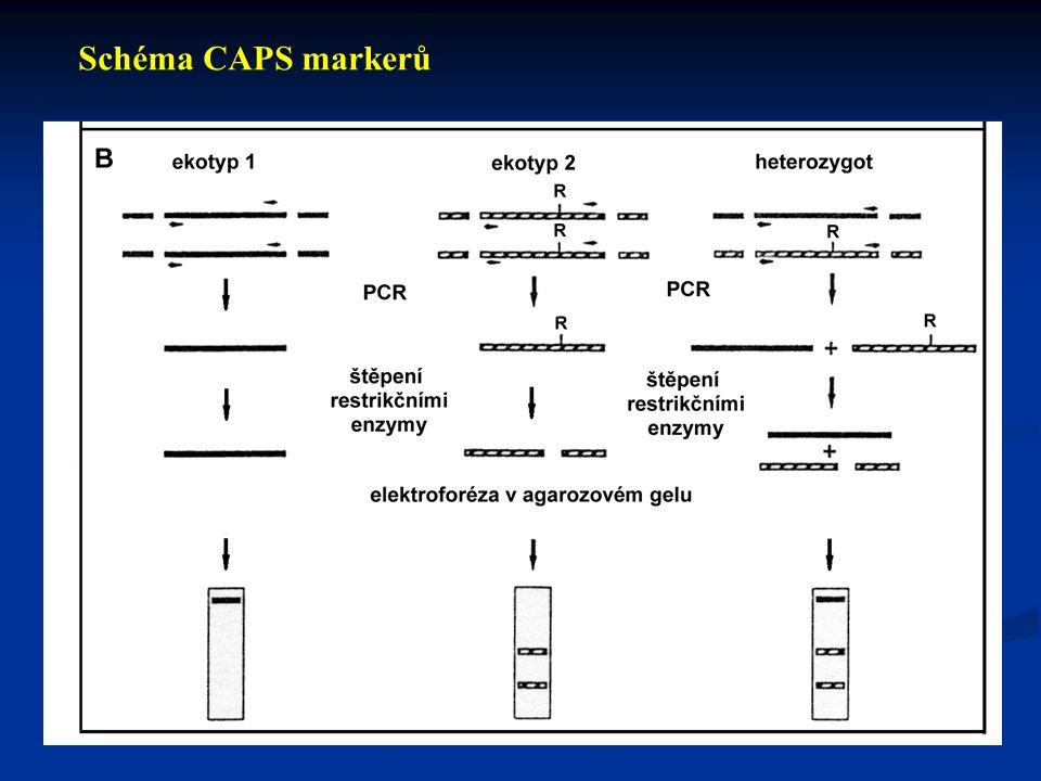 Typy DNA markerů Schéma SSR markerů