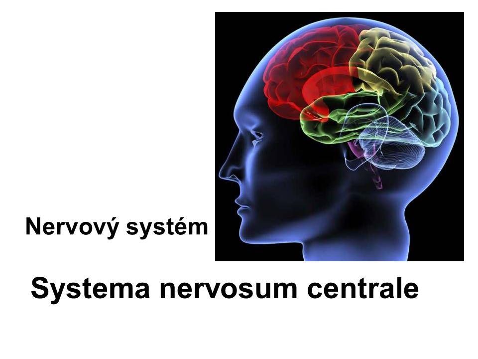 CNS je uložen v kostěném obalu (páteřní kanál a dutina lební) Plní funkce: koordinační Dělí se na : –Hřbetní míchu (medulla spinalis) –Mozek (encephalon)