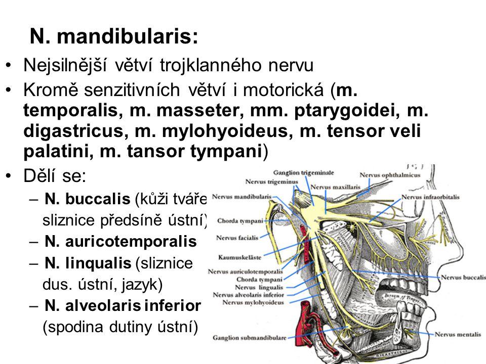 N. mandibularis: Nejsilnější větví trojklanného nervu Kromě senzitivních větví i motorická (m. temporalis, m. masseter, mm. ptarygoidei, m. digastricu
