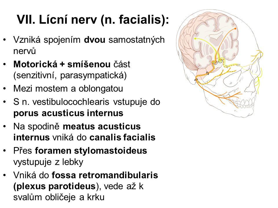 VII. Lícní nerv (n. facialis): Vzniká spojením dvou samostatných nervů Motorická + smíšenou část (senzitivní, parasympatická) Mezi mostem a oblongatou