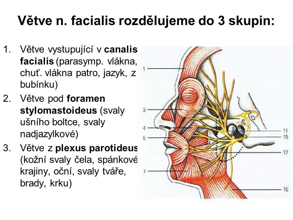 Větve n. facialis rozdělujeme do 3 skupin: 1.Větve vystupující v canalis facialis (parasymp. vlákna, chuť. vlákna patro, jazyk, z bubínku) 2.Větve pod